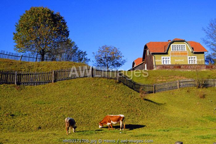 Romania, South of Bukovina Region, landscape on the main road between Cimpulung Moldovenesc and Gura Humorului towns along Moldovita river