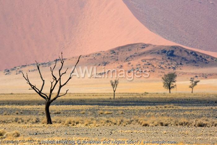 Africa, Namibia, Namib Desert, Sossusvlei. Dead trees in the Sossusvlei.