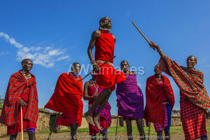 Africa, Kenya, Narok County, Masai Mara. Masai men dancing at their homestead.