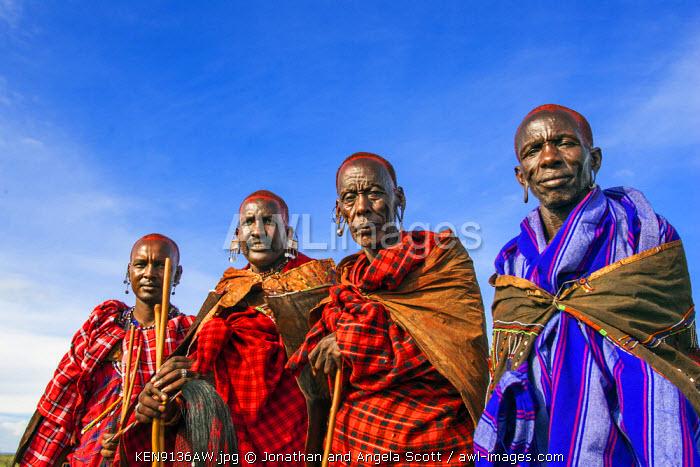 Africa, Kenya, Narok County, Masai Mara. Masai elders dressed in traditional attire at their homestead, preparing for one of their customary ceremonies.