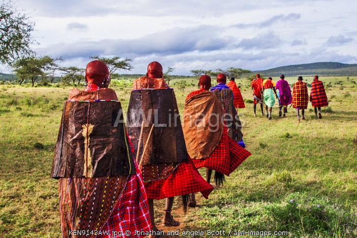 Africa, Kenya, Narok County, Masai Mara. Maasai Warriors