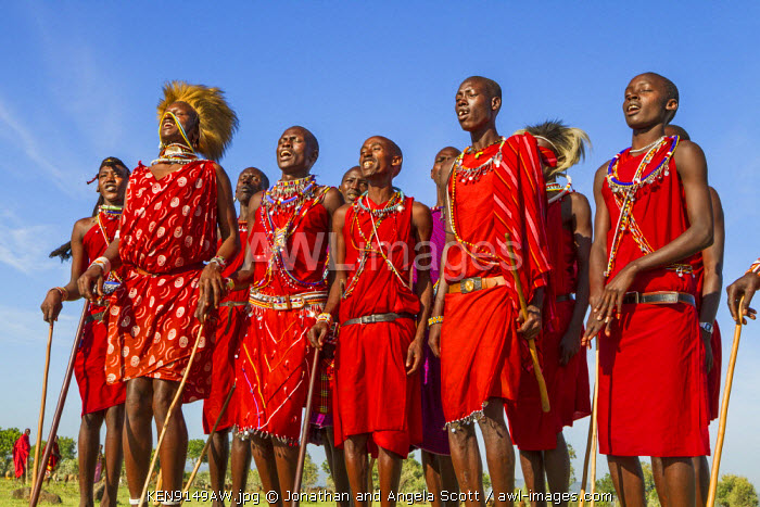 Africa, Kenya, Narok County, Masai Mara. Masai men dancing at their homestead