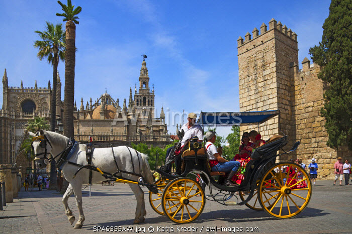 Horse-drawn carriage at Plaza del Triunfo, Seville, Andalusia, Spain