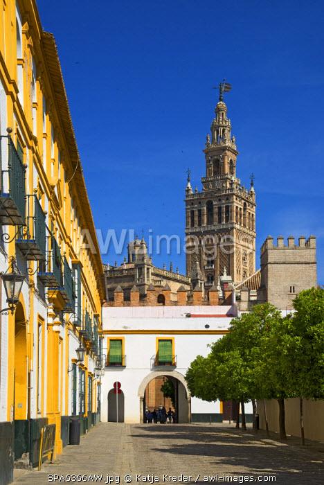 La Giralda Cathedral, Seville, Andalusia, Spain
