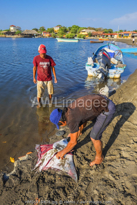Nicaragua, Leon department, Las Penitas fishing village, back from fishing, cutting out a manta