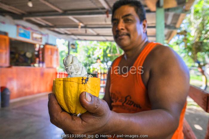 Nicaragua, Rio San Juan department, Solentiname islands, towards the southern end of Lake Nicaragua, Mancarron island, Ronaldo opens a cocoa pod