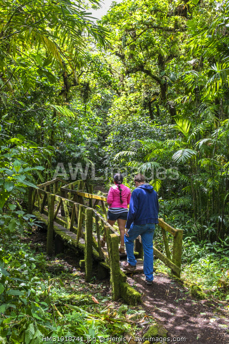 Nicaragua, Granada department, Mombacho Volcano Nature Reserve, hiking around the main crater on the trail Sendero del Crater, through a rainforest
