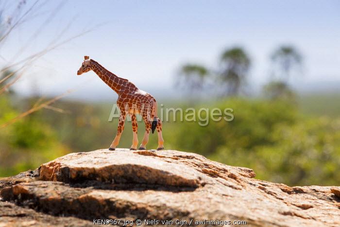 Kenya, Meru National Park. A toy giraffe in Meru National Park.