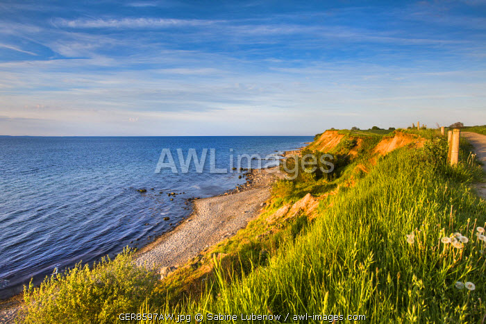 awl-images.com - Germany / Cliff Brodtener Ufer, Niendorf, Baltic coast, Schleswig-Holstein, Germany