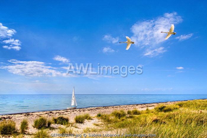 Sailing boat, beach, Flügge, Fehmarn island, Baltic coast, Schleswig-Holstein, Germany