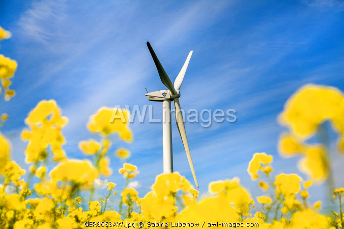 Wind turbine in rape field, Baltic coast, Schleswig-Holstein, Germany