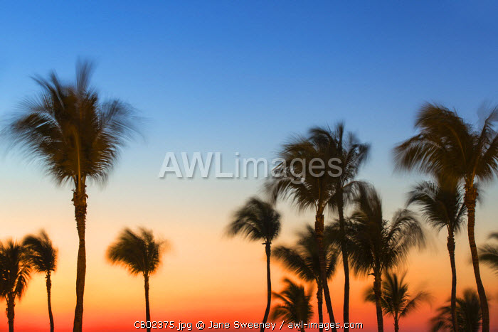 Cuba, Varadero, Palm trees  on Varadero beach at sunset