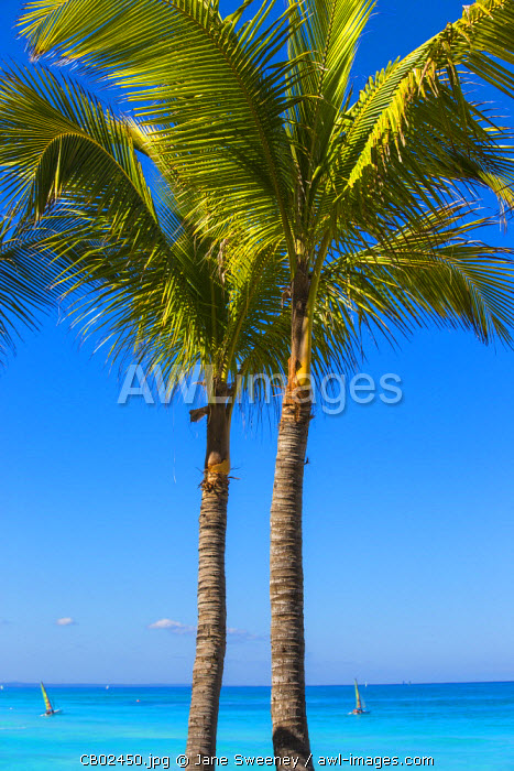 Cuba, Varadero, Palm trees on Varadero beach
