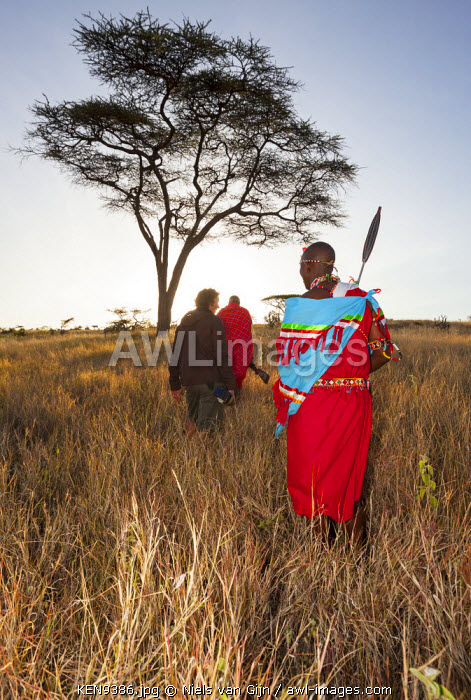 Kenya, Lewa Conservancy. A guest is escorted on a bush walk by Maasai guides.