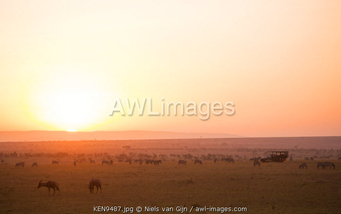 Kenya, Mara North Conservancy. Plains game graze peacefully in the morning light over the Mara North Conservancy.