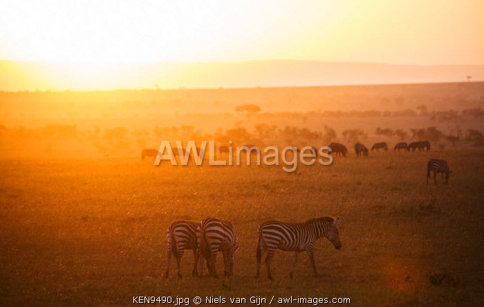 awl-images.com - Kenya / Kenya, Mara North Conservancy. Plains game graze peacefully in the morning light over the Mara North Conservancy.
