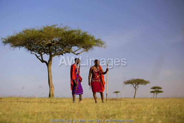 Kenya, Mara North Conservancy. Maasai under an acacia tree on the plains of the Maasai Mara.