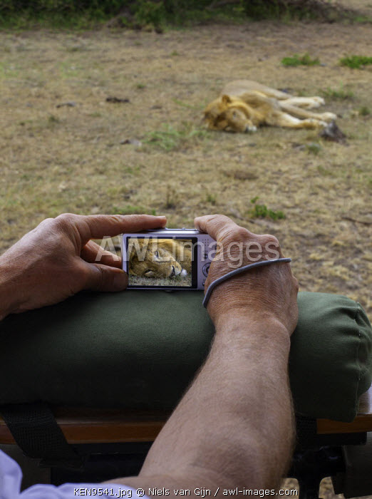 Kenya, Mara North Conservancy. A tourist composes a photograph of a male lion. MR.