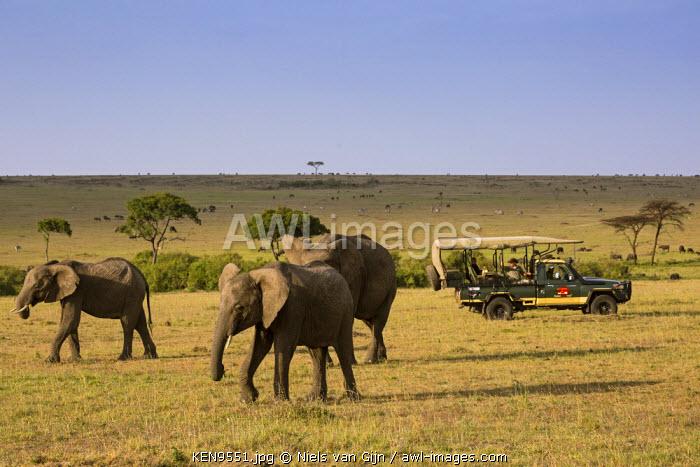 Kenya, Mara North Conservancy. A safari vehicle driving slowly past a small group of elephants.