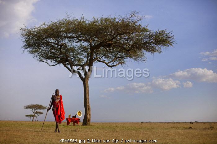 Kenya, Mara North Conservancy. A Maasai warrior and gramophone under an acacia tree in the Mara North Conservancy. MR.