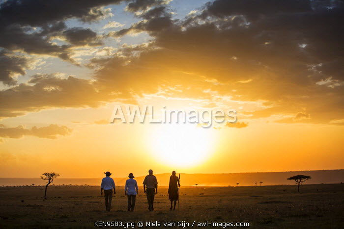 Kenya, Mara North Conservancy. A couple on an evening walking safari with their guide and Maasai.