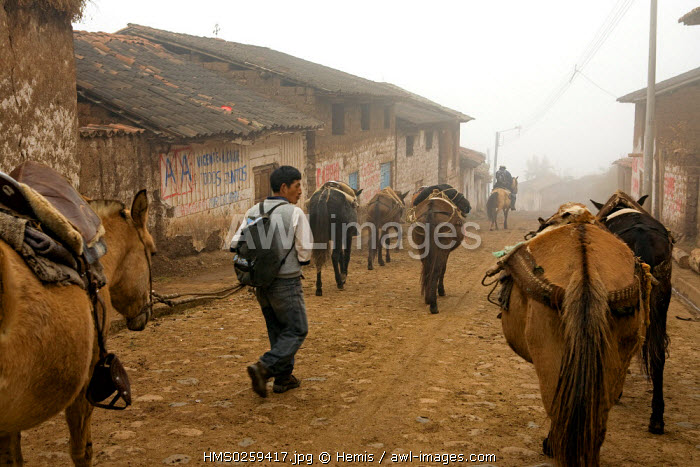 Peru, Cuzco Departement, the expedition to the Inca site of Choquequirao leaves the village of Cachora at dawn
