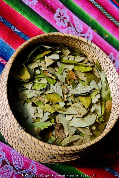 Peru, Puno Province, lake Titicaca, Llachon, as everywhere around the lake, the coca leaf is drunk as herbal tea