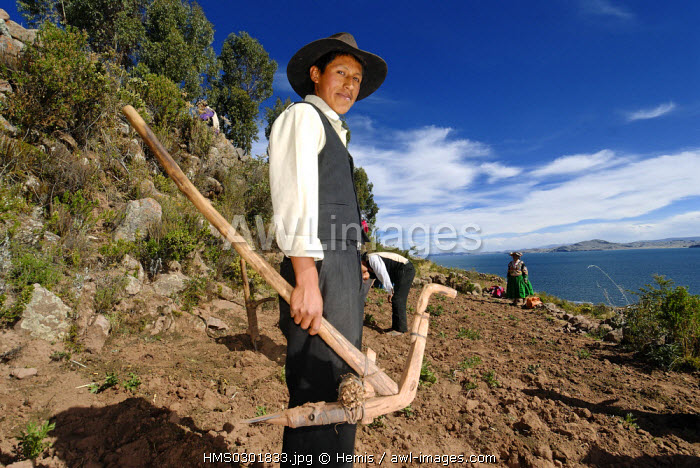 Peru, Puno Province, lake Titicaca, Llachon, field work, bedding plants of potatoes with traditional methods and manual tools