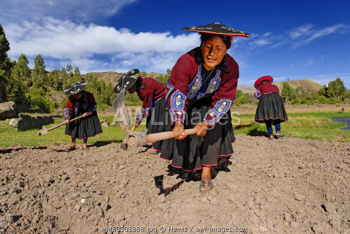 Peru, Cuzco Province, Raqchi, between Cuzco and Puno, former religious inca site, the population earns a living from cultivation and self sufficience