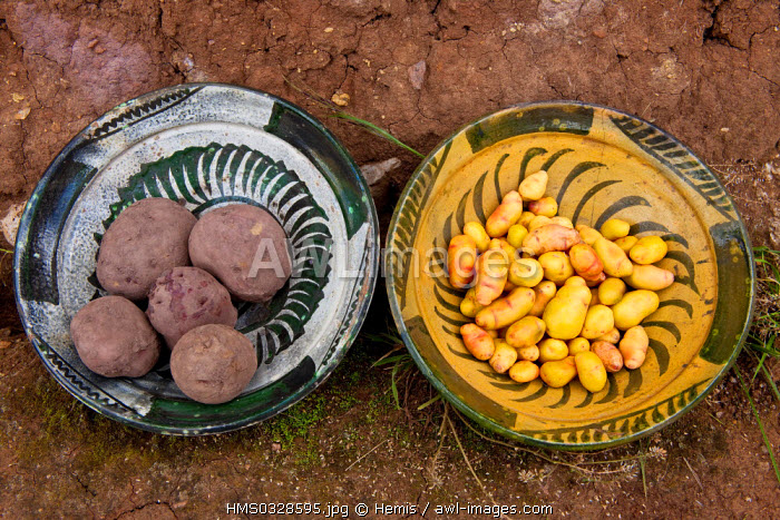 Peru, Cuzco Province, Incas sacred valley, Pisac, Parque de la Papa (Potato Park) managed by an autonomous community of Quechua Indians, variety of hardy potatoes