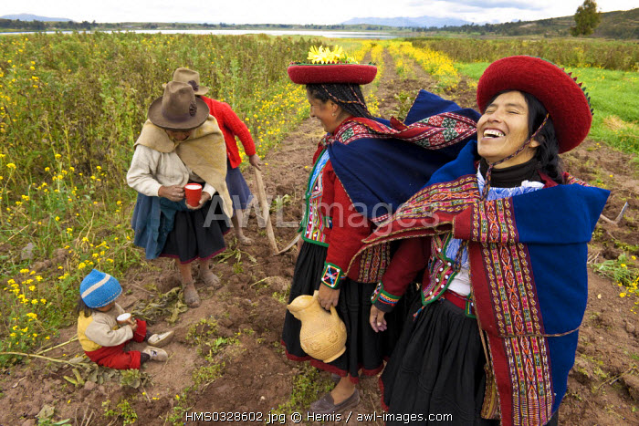 Peru, Cuzco Province, Incas sacred valley, Chinchero, Quechua Indians, Marleny Callanaupa and weaver from the Awana Wasi community offering to Pachamama Goddess (the Mother Earth) in a potato field