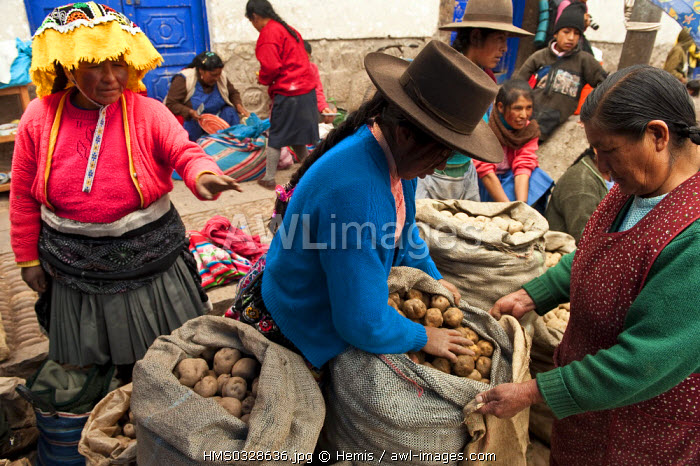 Peru, Cuzco Province, Incas sacred valley, Pisac, Quechua Indians coming for the market day, potato saleswoman