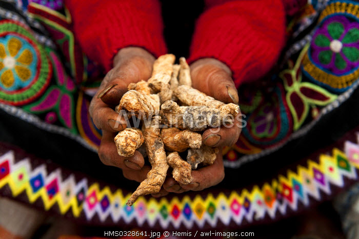 Peru, Cuzco Province, Incas sacred valley, Pisac, tuber used for making potato flour sold by Quechua Indian women in the market