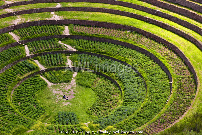 Peru, Cuzco Province, Incas sacred valley, Moray, Inca archeological site which served as agricultural research center, the big amphitheater and its circular terraces
