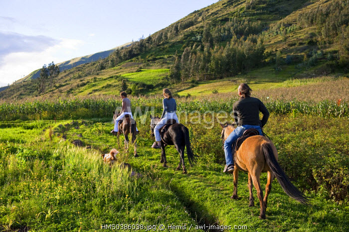 Peru, Cuzco province, Huasao, horseback riding in the Andes