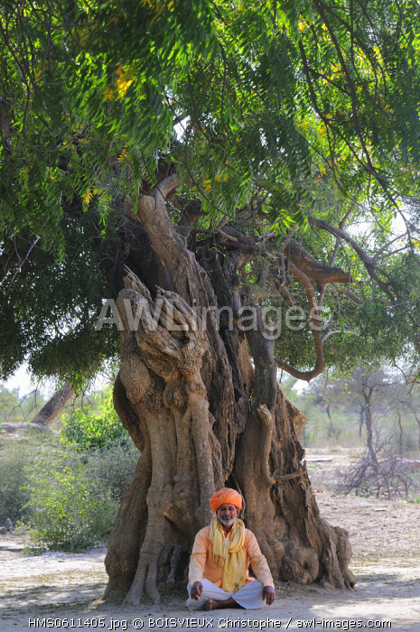 India, Rajasthan state, Khejarli, Ram Narayanji Bishnois meditating under a Jal tree supposed to be 1000 years old In 1730, 363 Bishnois from 84 villages lost their lives trying to prevent the soldiers of Jodhpur's maharajah Abhay Singh from cutting trees