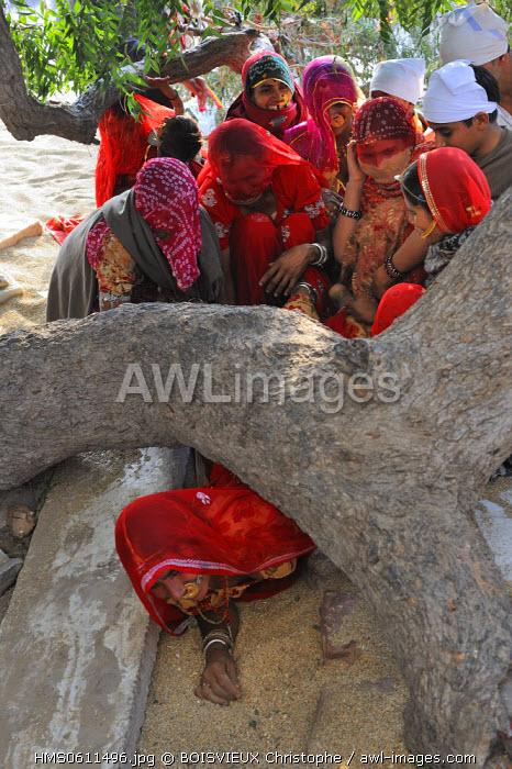 India, Rajasthan state, Mukam, Jambeshwar festival, Bishnois women crawling under a sacred Khejri tree