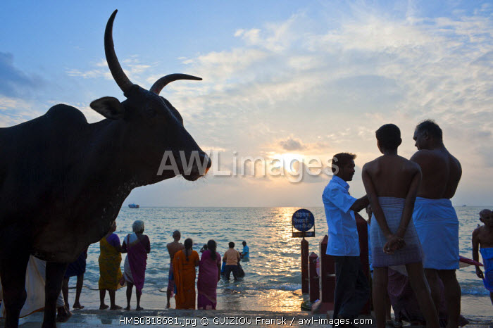 India, Tamil Nadu state, Rameswaram is one of the holy cities of India and an important pilgrimage site for both Shaivites and Vaishnavites, pilgrims purify themselves in the gulf of Mannar