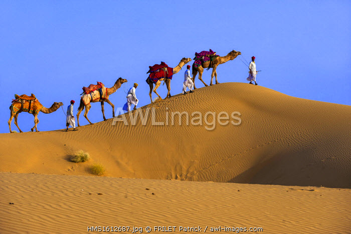 India, Rajasthan state, Jaisalmer, Rajput nomads with their camel caravan in the Thar desert
