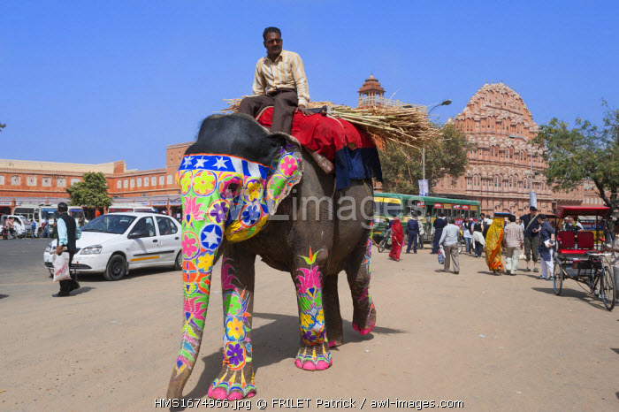 India, Rajasthan state, Jaipur, elephant past the Hawa Mahal Palace of the Winds