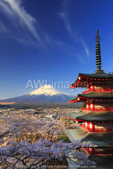 Japan, Yamanashi Prefecture, Fuji-Yoshida, Chureito Pagoda and Mt Fuji during Cherry Blossom Season