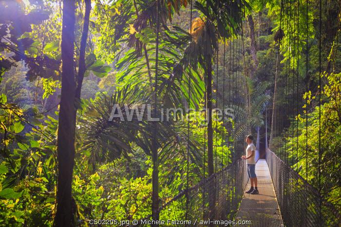Costa Rica, Central Highlands, Arenal National Park, Hanging Bridges inside Rainforest (MR)