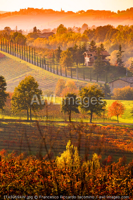 Castelvetro, Modena, Emilia Romagna, Italy. Sunset over the Lambrusco Grasparossa vineyards and rolling hills in autumn