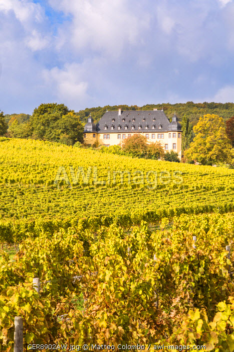Vollrads castle and vineyards, Rhine valley, Hesse, Germany