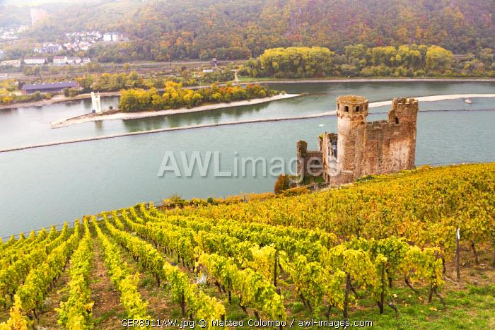 Burg Ehrenfels, Rudesheim, Rhine valley, Hesse, Germany