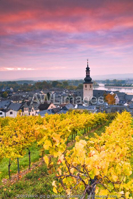 Sunrise over the vineyards of Rudesheim, Rhine valley, Hesse, Germany