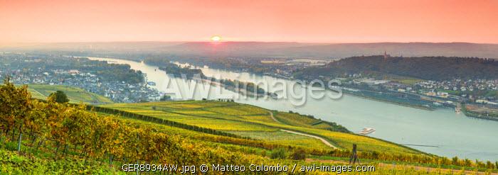 Sunrise over vineyards, Rudesheim, Rhine valley, Hesse, Germany