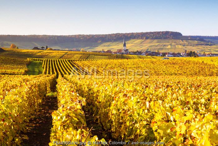 Vineyards, Chamery, Champagne Ardenne, France