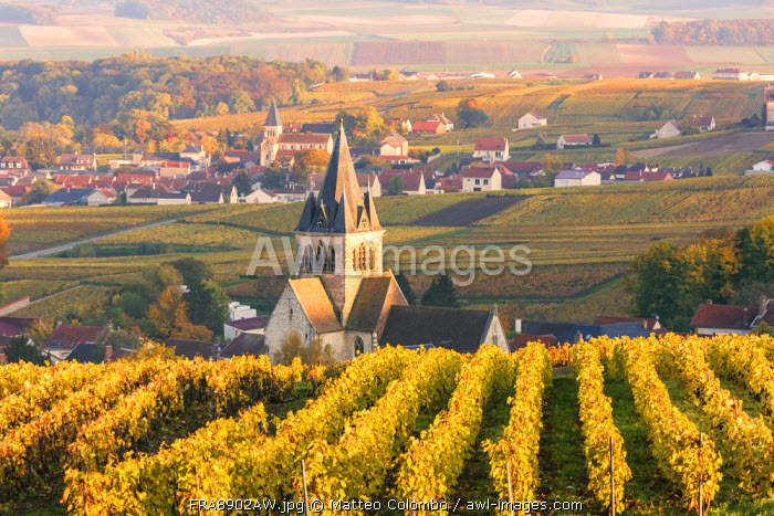 Sunset over the vineyards of Ville Dommange, Champagne Ardenne, France