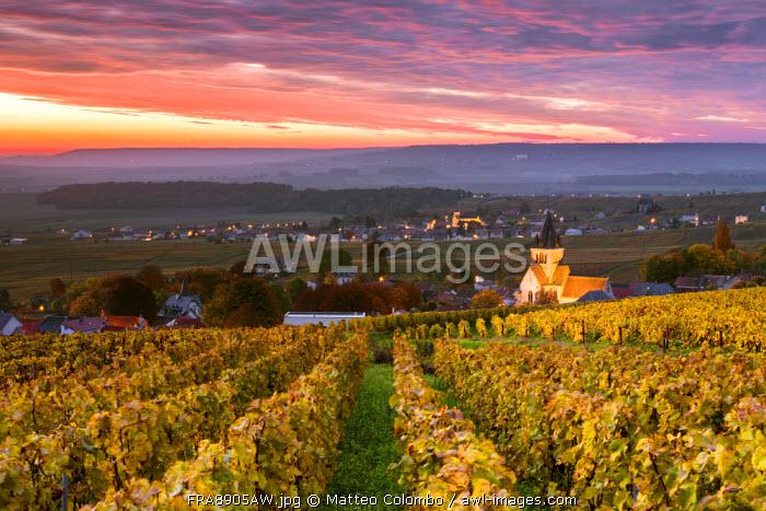 Colorful sunrise over the vineyards of Ville Dommange, Champagne Ardenne, France